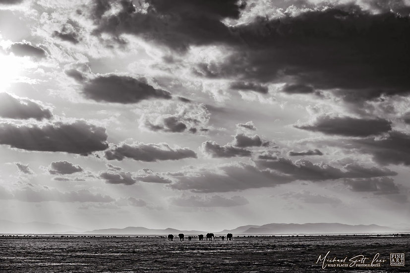 Elephants and clouds in Amboseli National Park, Michael Scott Lees fine art photographic prints for sale
