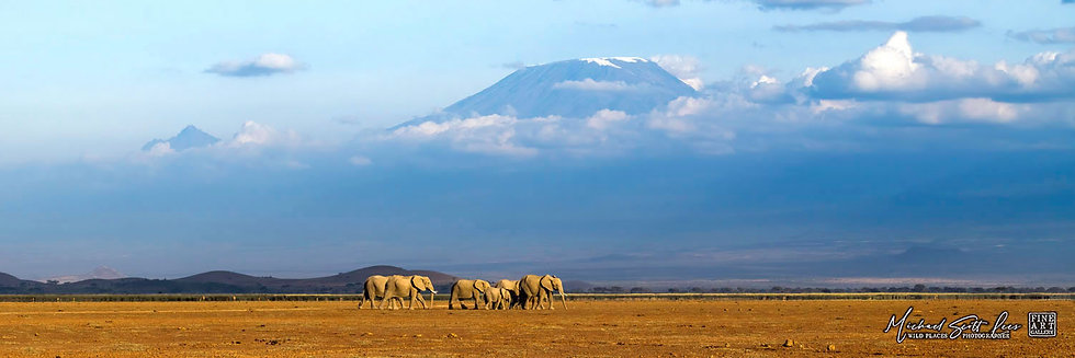 Elephants crossing a dead lake with Kilimanjaro in the background in Amboseli National Park, Kenya, Africa