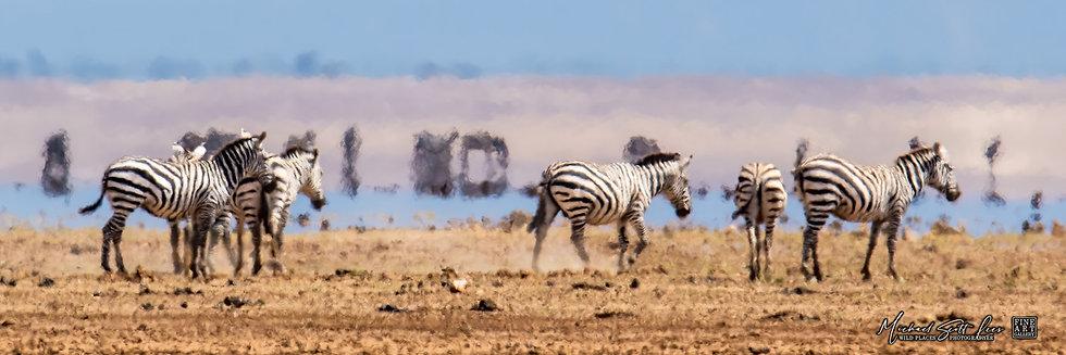 Zebras in Amboseli National Park, Michael Scott Lees fine art photographic prints for sale
