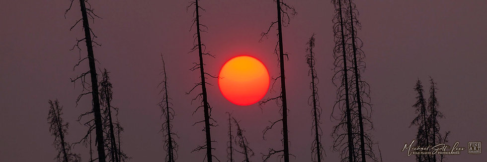Sunset on burnt trees in Jasper National Park, Alberta, Canada. Michael Scott Lees fine art photographic prints for sale