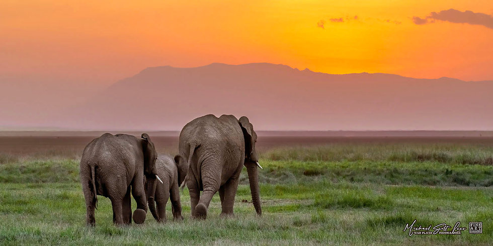 Elephants at sunset in Amboseli National Park, Michael Scott Lees fine art photographic prints for sale