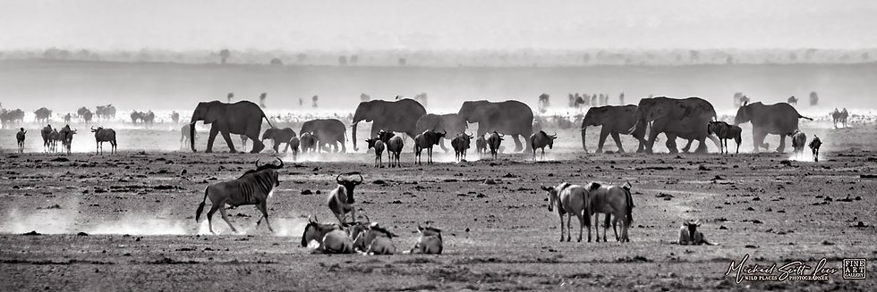 Elephants and Wildebeests on a dead lake in Amboseli National Park, Kenya, Africa, Michael Scott Lees fine art photography