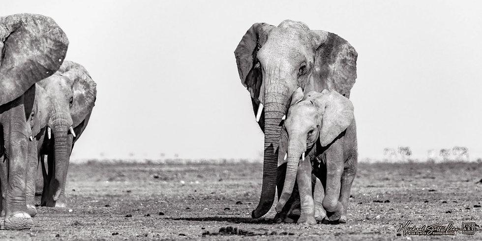 Elephants crossing a dead lake in Amboseli National Park, Michael Scott Lees fine art photographic prints for sale