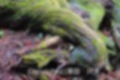 2sawadaDSC05618-(002).jpg