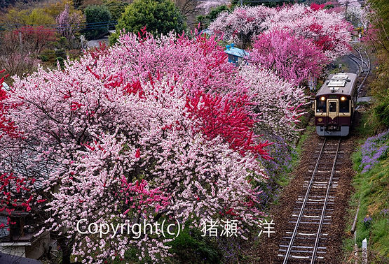 5inose猪瀬洋 わたらせ渓谷鉄道 春の彩り-(002).jpg