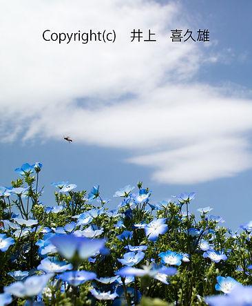4inoue井上喜久雄青に誘われて-(002).jpg
