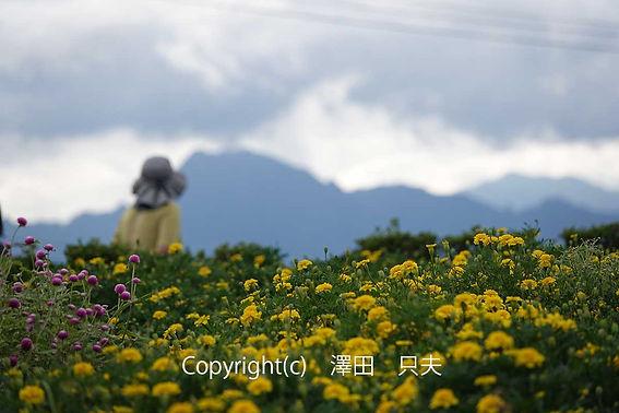 3sawada澤田 妙義を見晴らす花の丘DSC06245-(002).jpg