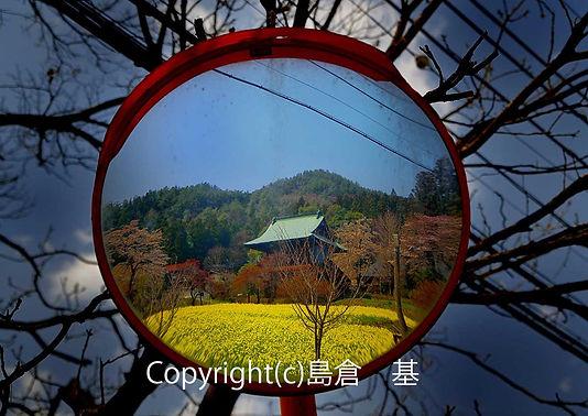1shimakuraMSD_4145_1_02_01.jpg