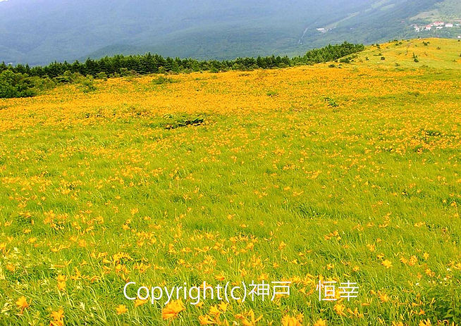 19kannbe失われた景色(在りし日の車山高原).jpg