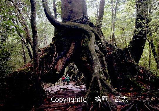 1103 Sinohara自由 篠原 武志小人の世界に迷い込む.jpg