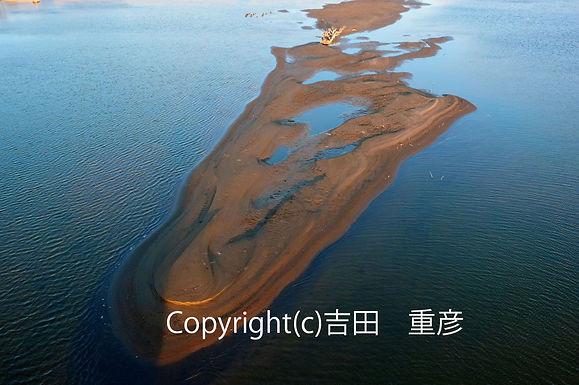 2月yosida鏑川に中州出現(002).jpg