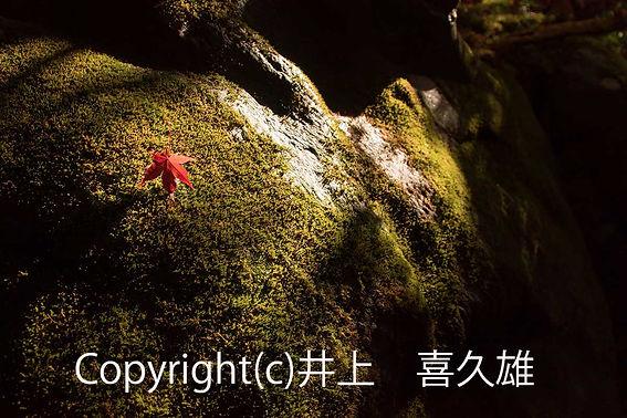2inoue晩秋サイズ変更-(002).jpg