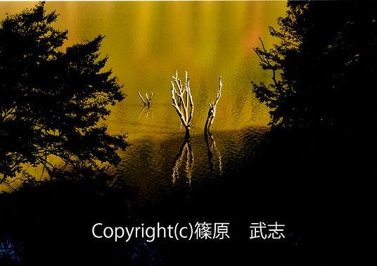 3sinohara古木の輝き.jpg