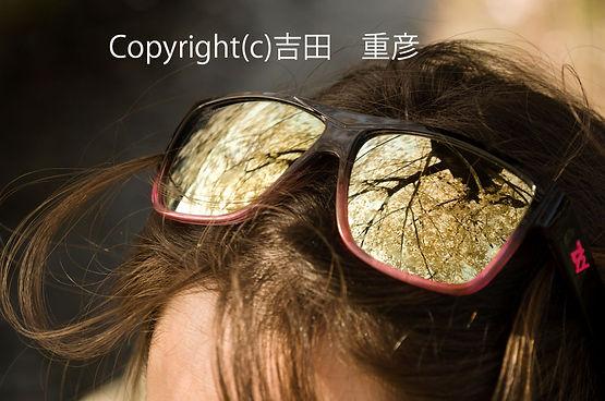1yosidaサクラグラスDSC00598-(002).jpg