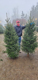 Shopping for our Xmas Tree Giveaway