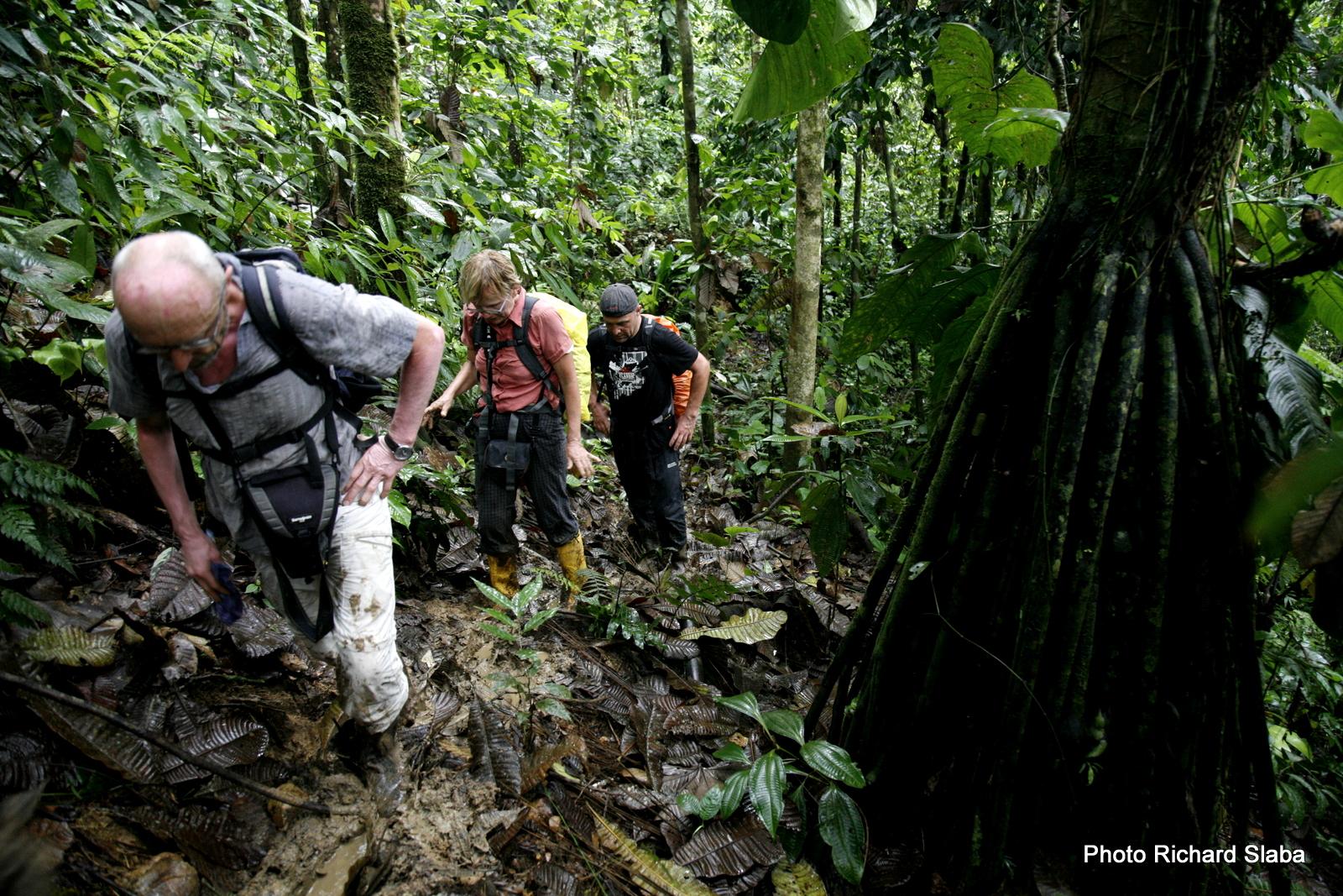 EKVADOR prales