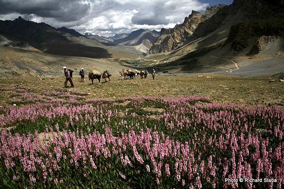 LADAKH, Indický Himaláj 2022/2023