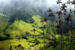 KOLUMBIE Valle de Cocora