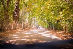 Ruta Olmué 2018