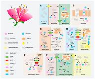 2017_Borghi_Fernie_PlantPhysiology.jpg