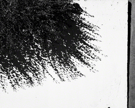 Plant, shadow, wall