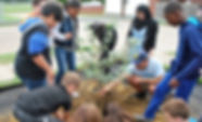 PR 11 D-SHINES tree planting.jpg
