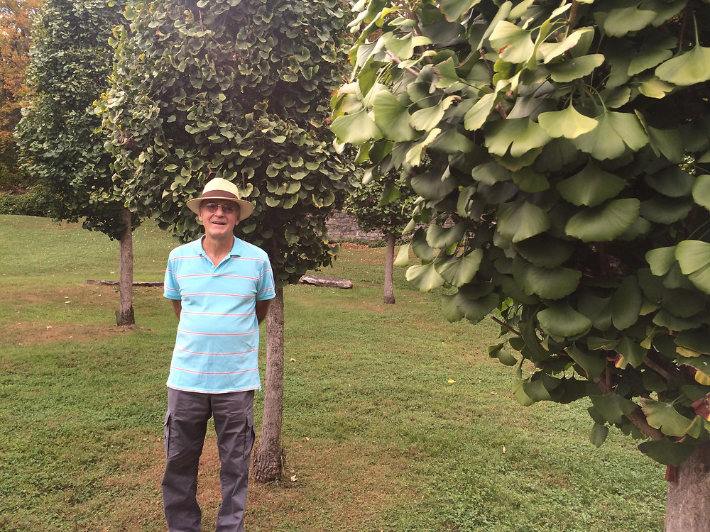 Man for walk in a garden after recovering from knee pain with acupuncture treatments