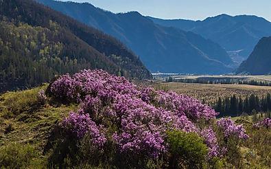 Весна на Алтае. Алтай-Этнотур.