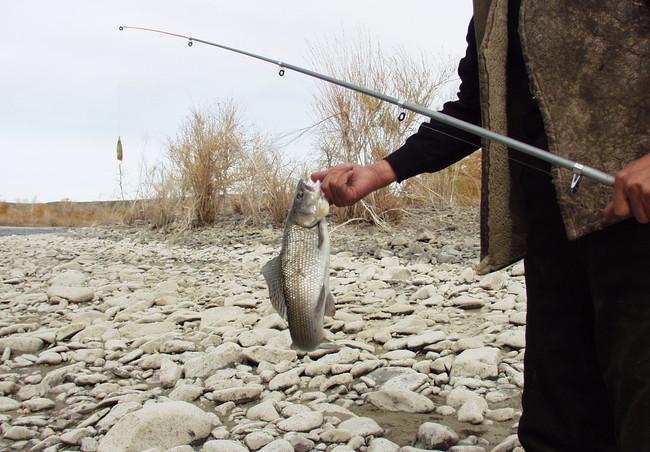 Хариус. Монголия.