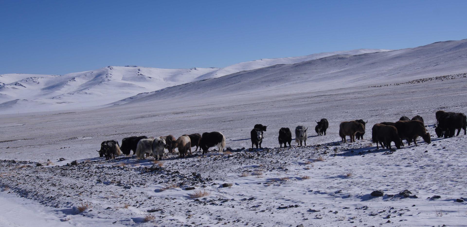 Монголия. Алтай-Этнотур.