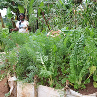 Harvest of the Hope & Health Garden Project