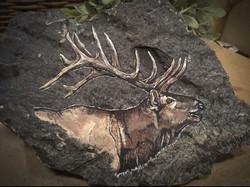 Elk on Slate
