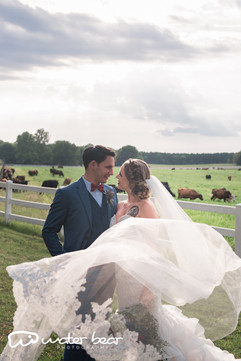 Veil and Cows