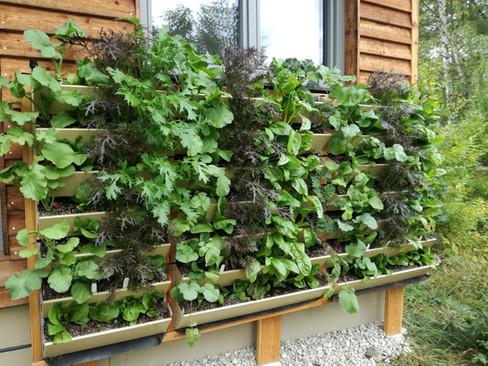 Vertikal Gärtnern an der eigenen Hauswand