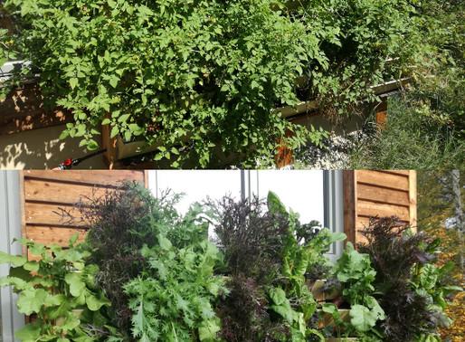 Ganzjährig, ökologisch und vertikal gärtnern!