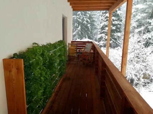 Wintergemüse im Vertikalgarten: ein must-have!