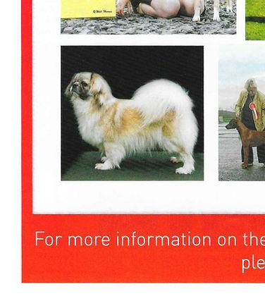 Dog World Annual 2017 Tibetan Spaniel