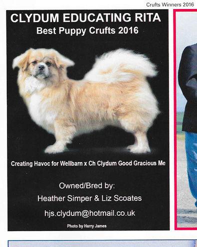 Tibetan Spaniel Crufts Winners