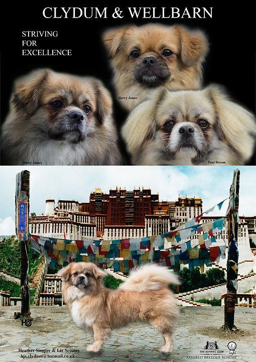 Tibetan Spaniel Dog World Annual 2017