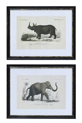 Cuadro rinoceronte o elefante