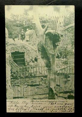1907 LINCOLN PARK ZOO Chicago Illinois,