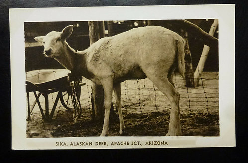 Sika, Alaskan Deer, Apache Jct., Arizona RPPC