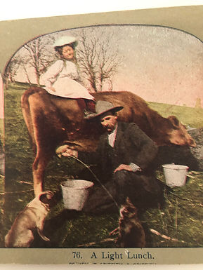 """Antique HUMOROUS 1900's Stereoview """"A Light Lunch"""" Cat drinking Milk From Cow"""