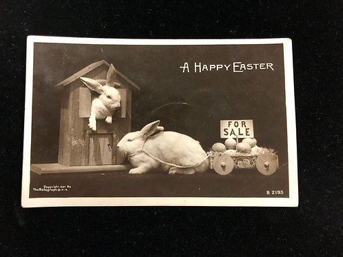 Antique Easter Postcard, real photo of white bunnies