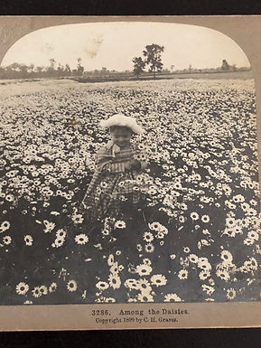 """Antique 1900's Stereoview """"Among the Daisies"""" BABY IN A FIELD OF DAISIES"""
