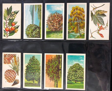 Vintage TEA trading cards Brooke Bond Tea- TREES OF BRITAIN series, 9 of 50