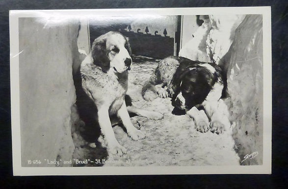 1949 RPPC Saint Bernard dogs at Timberline Lodge