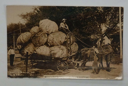 1908 Exaggeration Giant Cabbage Horse Drawn Wagon