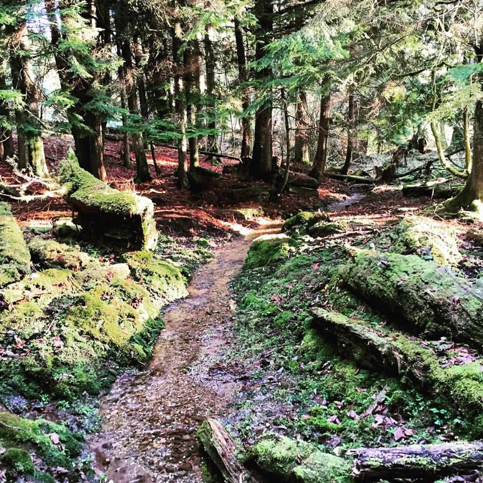 2016 Pilchuck Tree Farm Survey.jpg