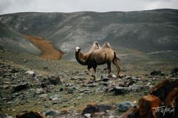 mongoliapogoram321